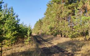 Картинка осень, лес, деревья, просёлочная дорога