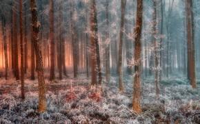 Картинка иней, лес, forest, frost, Jure Kravanja