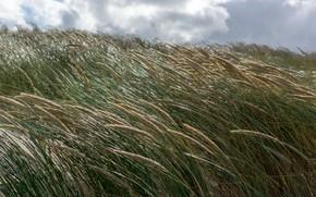 Картинка море, трава, солнце, ветер, берег