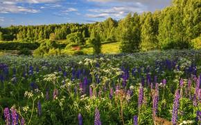 Картинка лето, деревья, цветы, луг