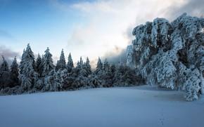 Картинка холод, зима, снег
