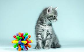 Картинка кошка, взгляд, поза, котенок, серый, фон, голубой, игрушка, малыш, профиль, котёнок, сидит, полосатый, яркие цвета