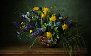 Картинка одуванчик, корзина, полевые цветы, незабудка