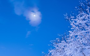 Картинка зима, небо, снег, ветки