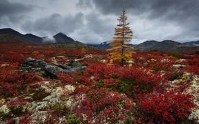 Картинка горы, камни, дерево, Природа, растения, Колыма, Максим Евдокимов