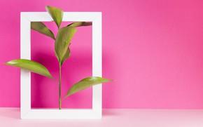Картинка розовый, растение, рамка, розовый фон, pink, малиновый
