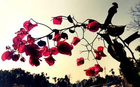 Картинка Red, Nature, Flower, Flowers, Crimson