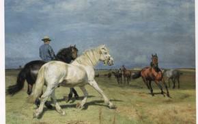 Картинка поле, лошади, мужчина в шляпе, FISCHER