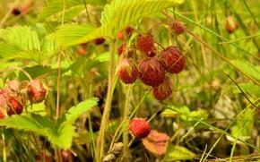 Картинка природа, ягоды, земляника