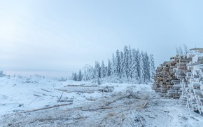 Картинка зима, лес, небо, снег, природа, ели, брёвна