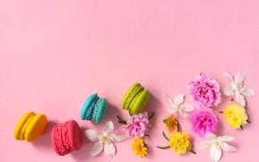 Картинка цветы, пирожные, макаруны