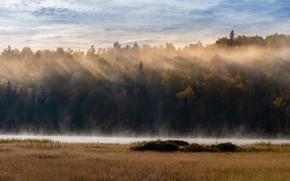 Картинка осень, лес, трава, облака, лучи, свет, туман, река, берег