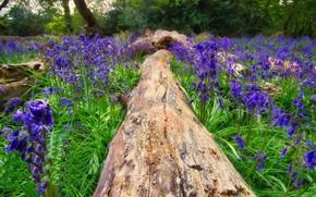 Картинка цветы, дерево, весна, бревно