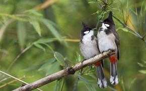 Картинка птицы, ветка, пара