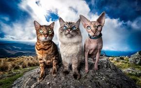 Картинка кошка, небо, кот, взгляд, солнце, облака, кошки, пейзаж, горы, природа, поза, синева, камни, фон, вместе, …
