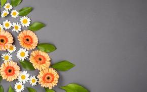Картинка цветы, серый фон, flower, декор, composition