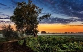 Картинка дорога, дерево, заря