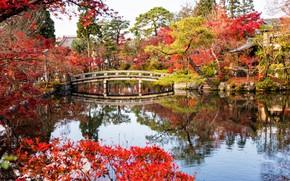 Картинка bridge, парк, leaves, Kyoto, fall, tree, листья, Киото, осень, park, Japan, мост, деревья, lake, Япония, …