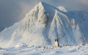 Картинка холод, зима, иней, снег, горы, камни, собака, сидит, бордер-колли, снежные вершины
