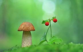 Картинка макро, фото, гриб, земляника