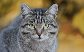 Картинка кот, морда, фон