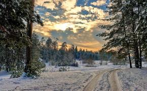 Картинка зима, дорога, лес, снег, пейзаж, природа