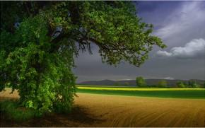Картинка поле, лето, тучи, дерево, перед грозой