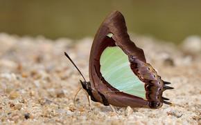 Картинка макро, земля, бабочка