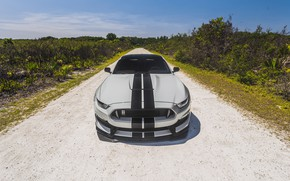 Обои Mustang, Ford, Shelby, Ford Mustang, GT350, Ford Mustang Shelby GT350, Shelby GT350