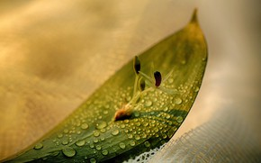 Картинка flower, photography, nature, water, macro, water drops, still life, Leave