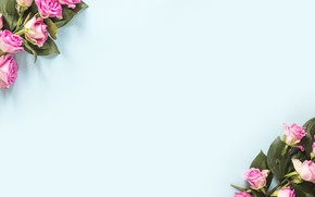 Картинка листья, цветы, фон, голубой, розы, розовые, бутоны, blue, pink, background, декор, roses