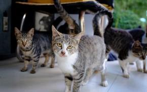 Картинка кошки, банда, полосатые