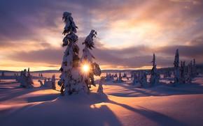 Картинка зима, солнце, лучи, снег, деревья, пейзаж, природа, утро, ели, Jørn Allan Pedersen