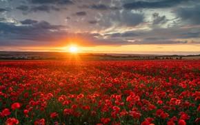 Картинка поле, закат, цветы, Англия, маки, England, Wiltshire, Уилтшир