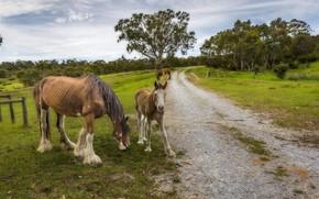 Картинка дорога, лошадь, жеребёнок