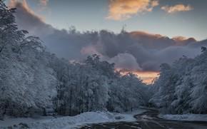 Картинка иней, дорога, лес, небо, облака, деревья, мороз