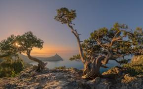 Картинка море, деревья, рассвет, утро, Россия, Крым, Чёрное море, Новый Свет, Делилиманская бухта, Мыс Капчик