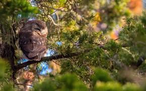 Картинка лес, ветки, дерево, сова, боке