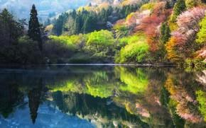 Картинка деревья, природа, озеро, весна, Южная Корея, 대한민국, 전라남도, 全羅南道, 大韓民國, Хвасун, Чолла-Намдо