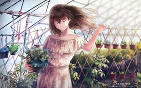 Картинка девушка, теплица, аниме