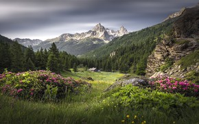 Картинка лес, трава, пейзаж, цветы, горы, природа, красота, луг, простор, панорама