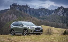 Картинка горы, Subaru, луг, кроссовер, Forester, 2019