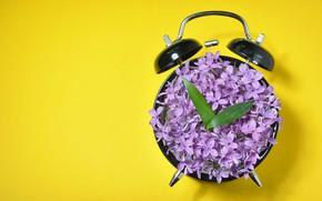Картинка цветы, желтый, фон, стрелки, часы, минимализм, лепестки, будильник, листочки, циферблат, сирень