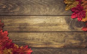 Картинка осень, листья, фон, colorful, wood, background, autumn, leaves, осенние, maple