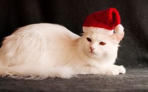 Картинка кошка, темный фон, праздник, новый год, рождество, белая, образ, санта клаус, санта, колпак