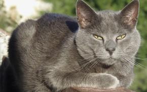 Картинка кот, серый кот, кот на балконе, взрослый кот