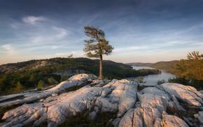 Картинка река, дерево, гора
