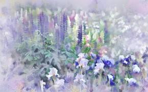 Картинка цветы, луг, фиолетовые, ирисы, люпин