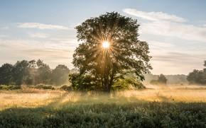 Картинка поле, лето, небо, солнце, облака, лучи, свет, деревья, туман, дерево, ветви, растительность, утро, луг, дымка, …
