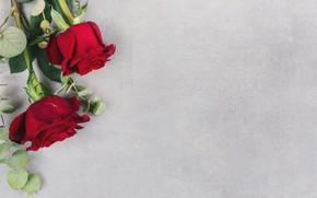 Картинка цветы, фон, розы, бутоны